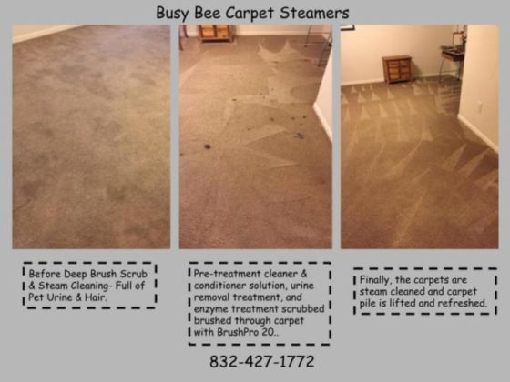 Pet Urine & Odor Removal - Busy Bee